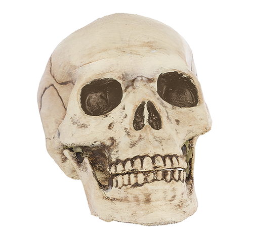 Jointed Mouth Plastic Skull Head